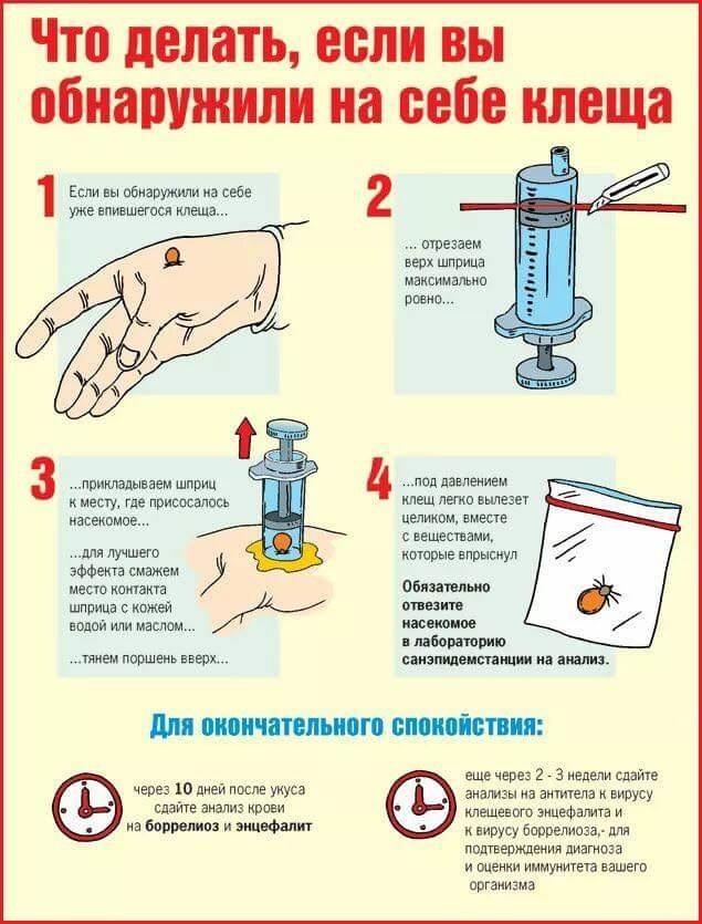 инструкция по охране труда при укусе клеща